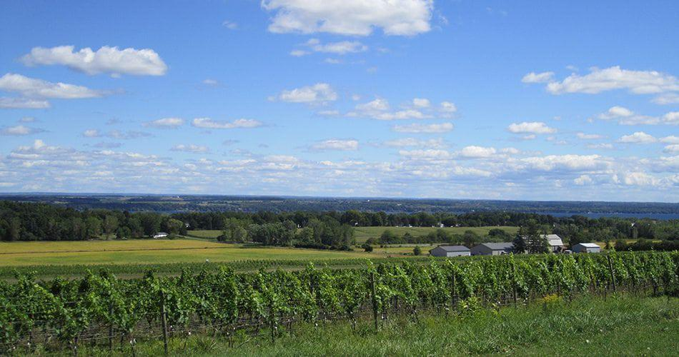 This Summer Visit These 5 Wineries In The Finger Lakes